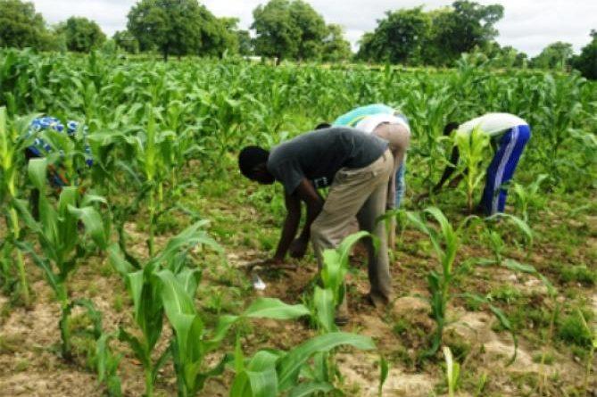 champ_de_mais_agriculture_312236503